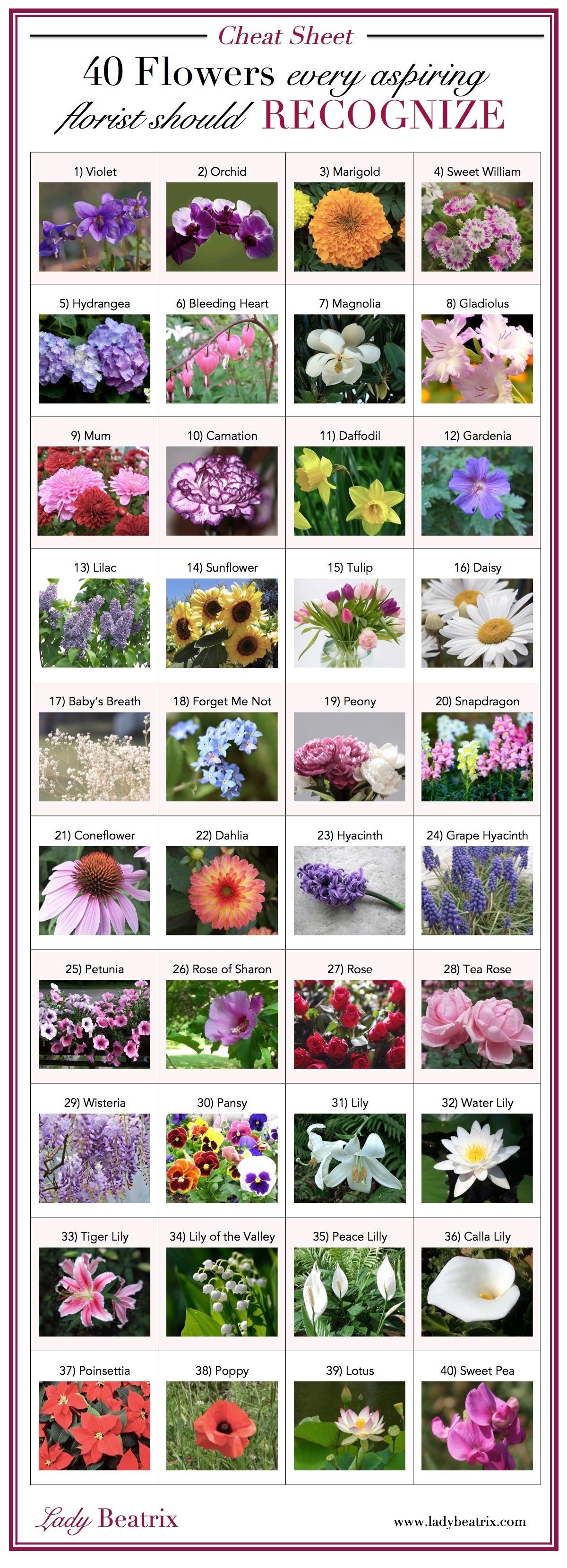 Flower Chart (1)